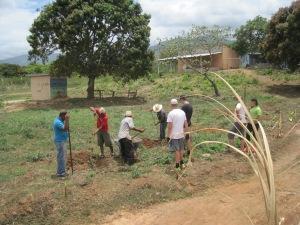 planting citrus